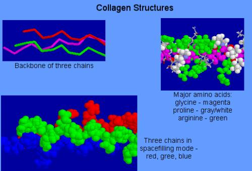 cau truc collagen
