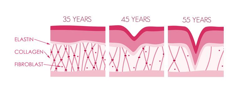 collagen and elastin aging