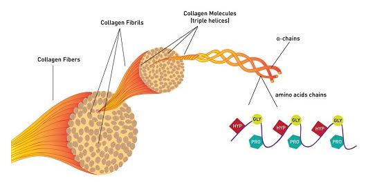 collagen la gi cong dung noi bat cua collagen doi voi co the