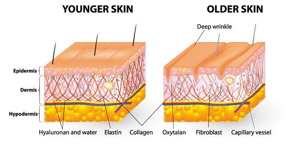 collagen type 1 2 3 la gi cong dung cua collagen type 1 2 3
